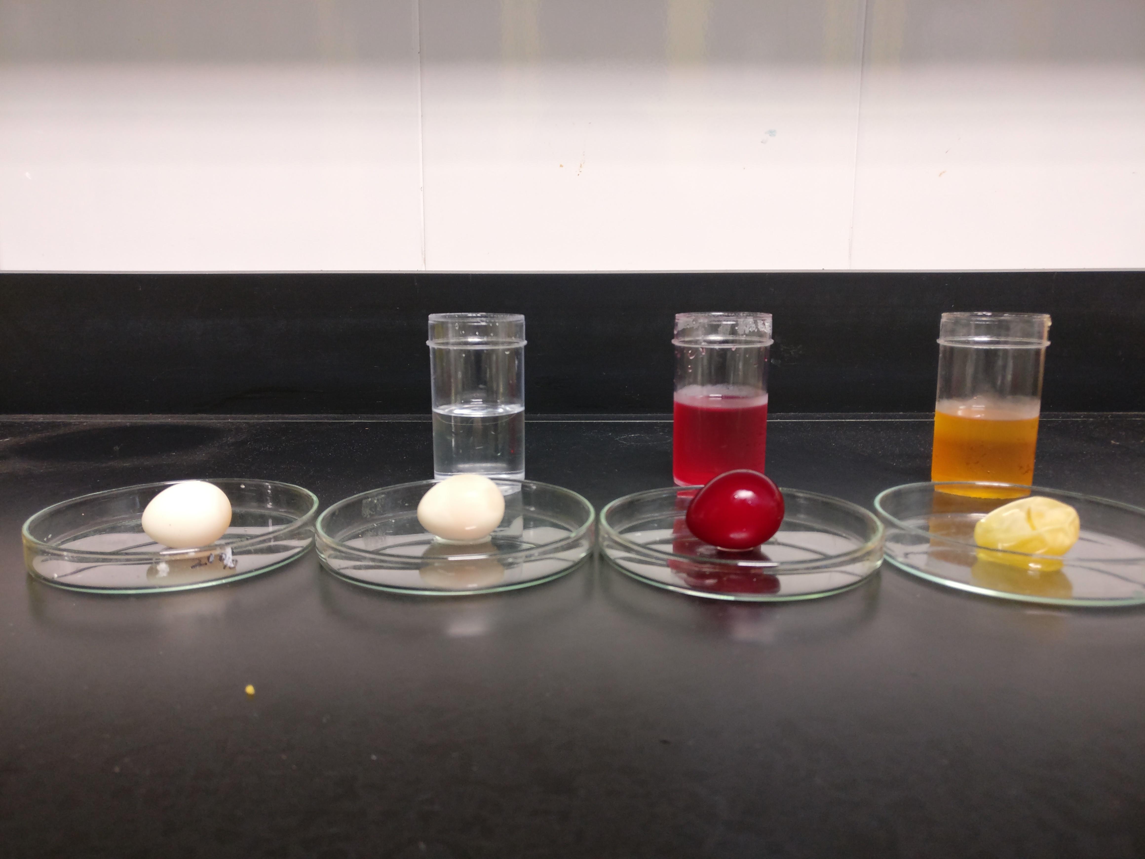 Diffusion and Osmosis using raw egg | Hello!